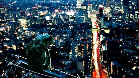 Dreaming Murakami og Geshegu Exile på DR og Politiken